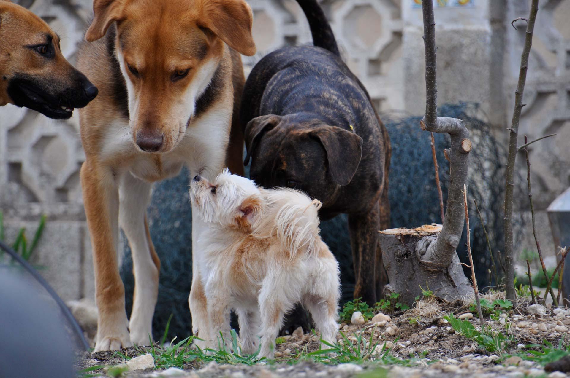 Willkommen bei Denia Dogs e.V.