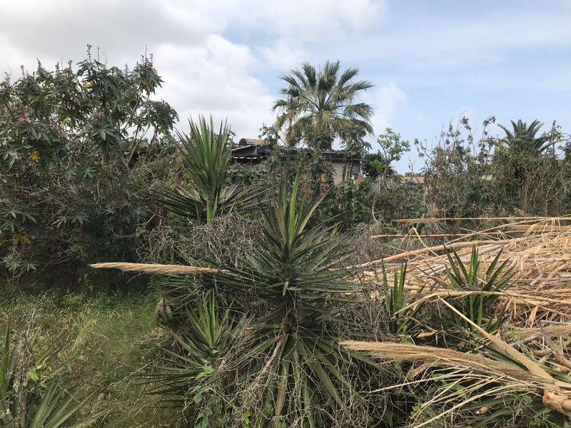 Palmen und anderes Grünzeug